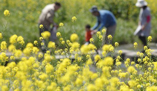 沖縄には花粉症がない!移住したら天国が待っている
